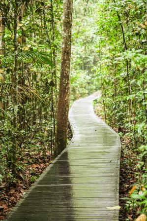 Boardwalk through the rainforest.