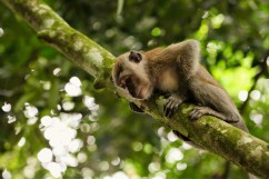 Rest time for an adolescent macaque.