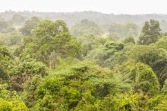 Overlooking the rainforest canopy.